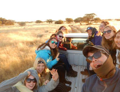 Video: op safari…