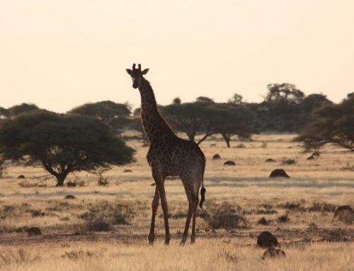 Blog1 Werkgroep2019: Nieuwe groep op de Afrikaanse vlakte…