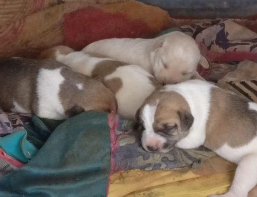 Antoinette in Zuid Afrika blog 6: Honden en katten